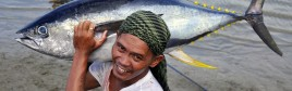 Bild zu Topthema OTS/Gregg Yan/ WWF