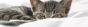 Bild zu Weltkatzentag